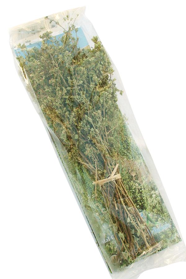 Økologisk oregano på stilk
