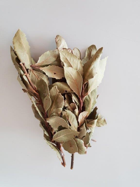 Økologisk og tørret laurbær på stilk fra sikani