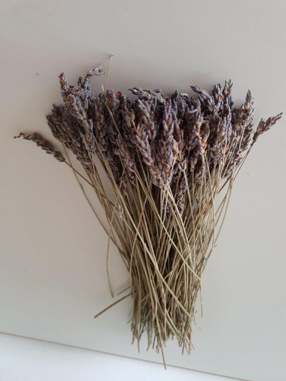 Økologiske og tørrede lavendler på stilk fra sikani