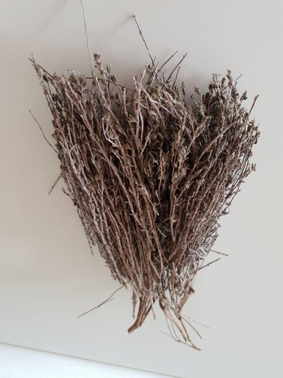 Økologisk og tørret timian på stilk fra sikani